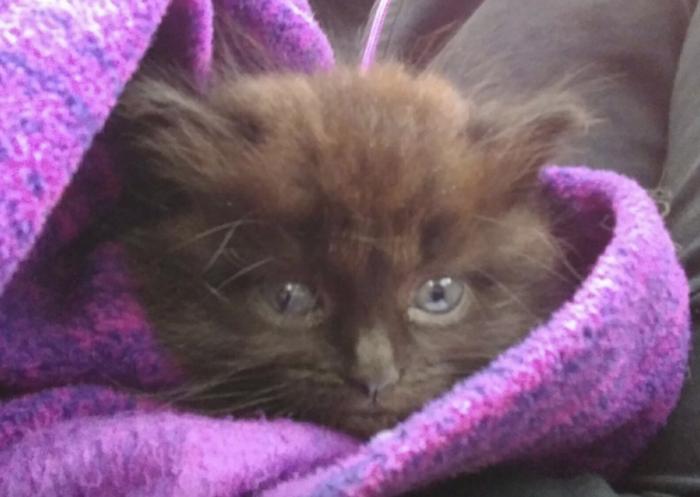 Низкий кот — мало хлопот, или как растить кота-инвалида Кот, Подкидыш, Инвалид, Вертикальное видео, Видео, Фотография, Длиннопост