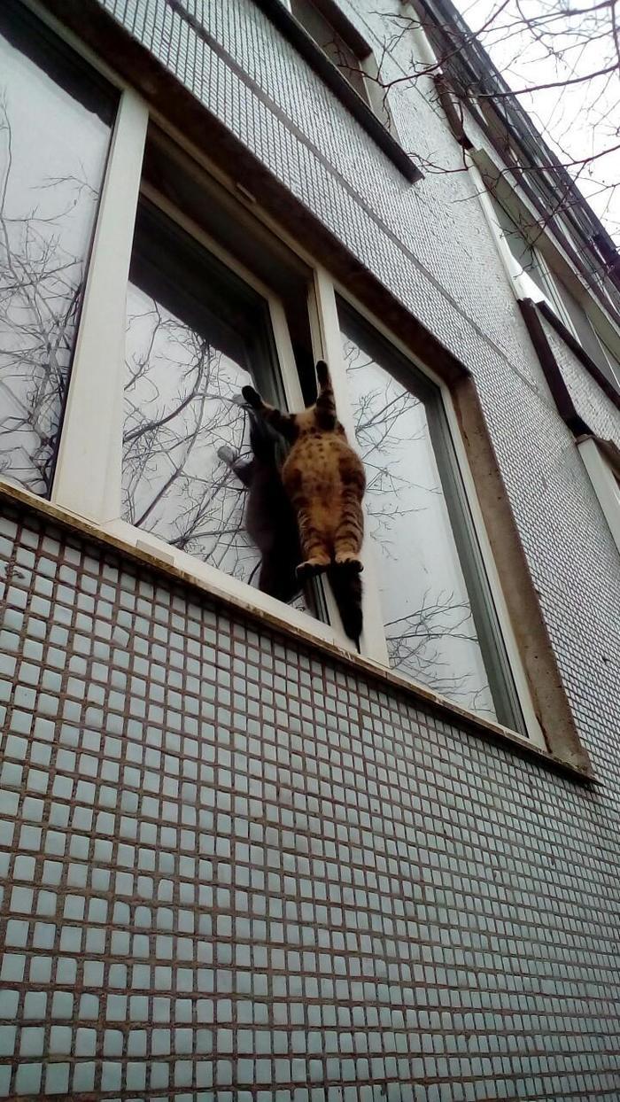 Проблемы мартовских котов Кот, Весна, Опасность, Окно, Жесть