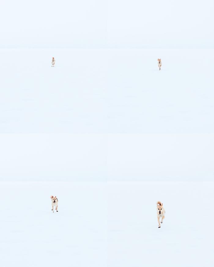Ко мне! Собака, Лайка, Зима, Фотография, Беларусь