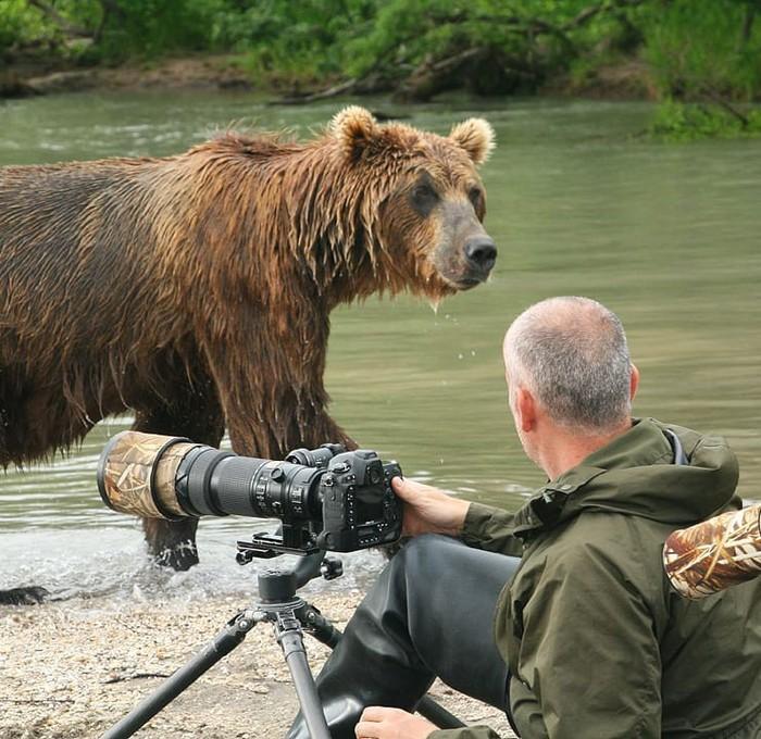 А как же зона комфорта? Фотография, Медведь, Животные, Фотограф