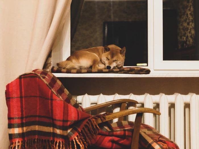 Домашний охотник за сном.