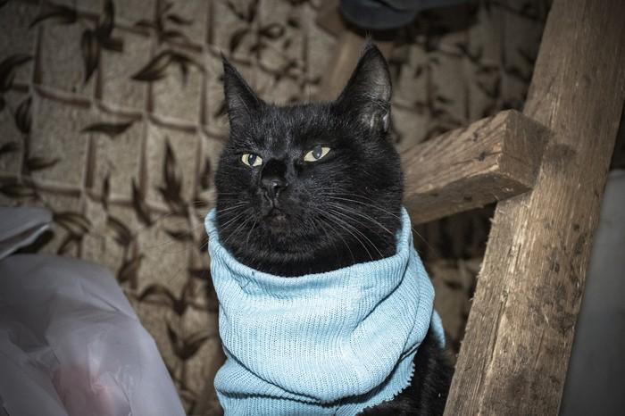 Коты шарят в одежде... почти... Кот, Одежда, Фотография, Удобство