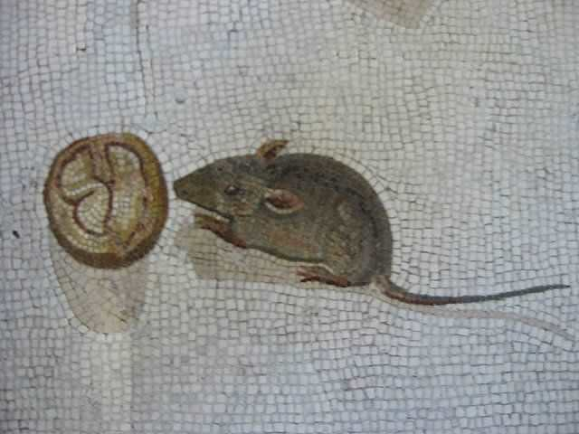 Древнеримская мышь крадется