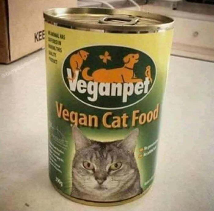 Когда твой кот - веган