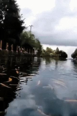 Мечта рыболова.