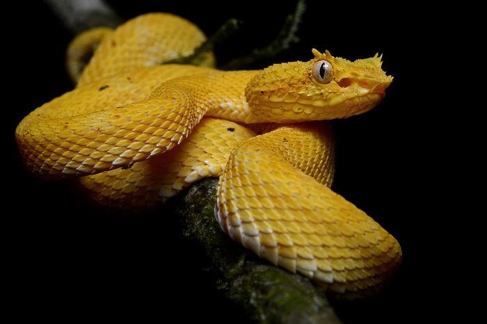 Остров змей Укус змеи, Змея, Ядовитая змея, Остров, Опасность, Хищник, Путешествия, Длиннопост