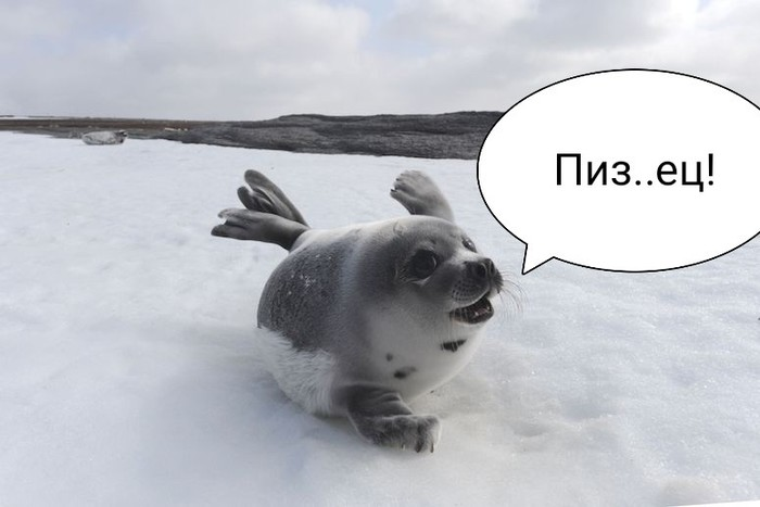 Кулинарные новости. Тюлень, Колбаса, Длиннопост