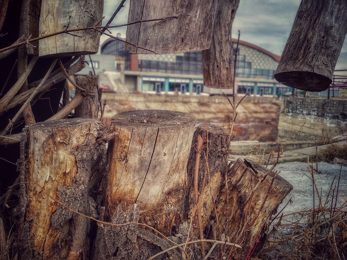 Сражен, но не сломлен Фотография, Противостояние, Дерево, ЛЭП, Барнаул, Длиннопост