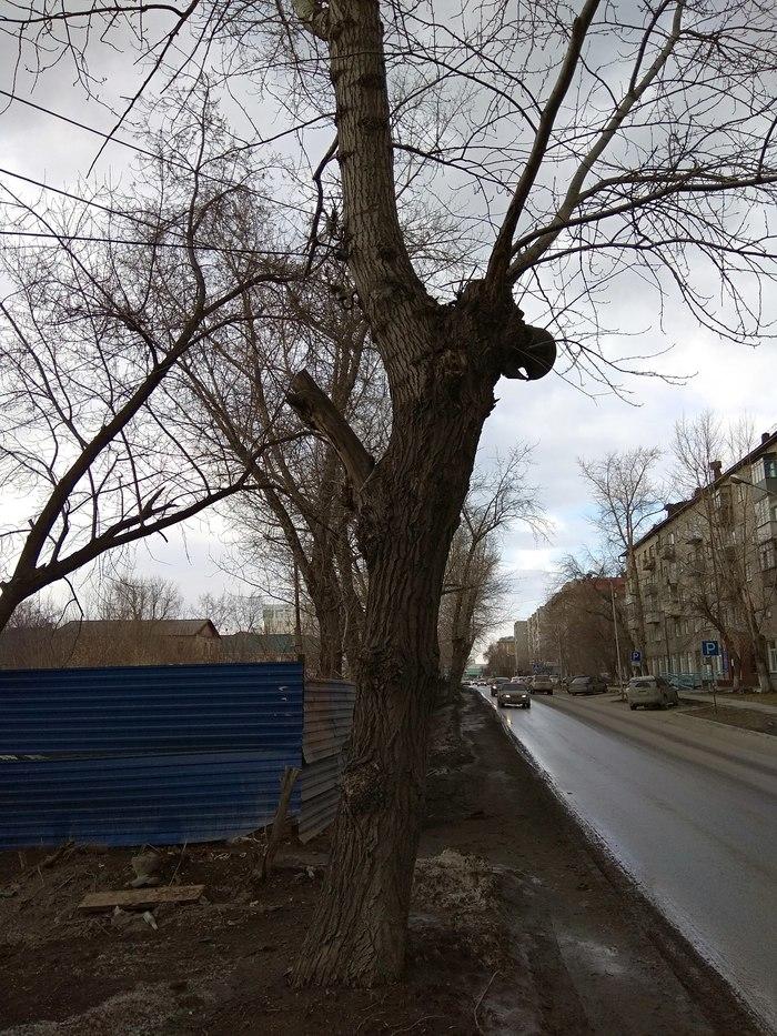 Хардкор от электросетей Электросети, Дерево, Длиннопост