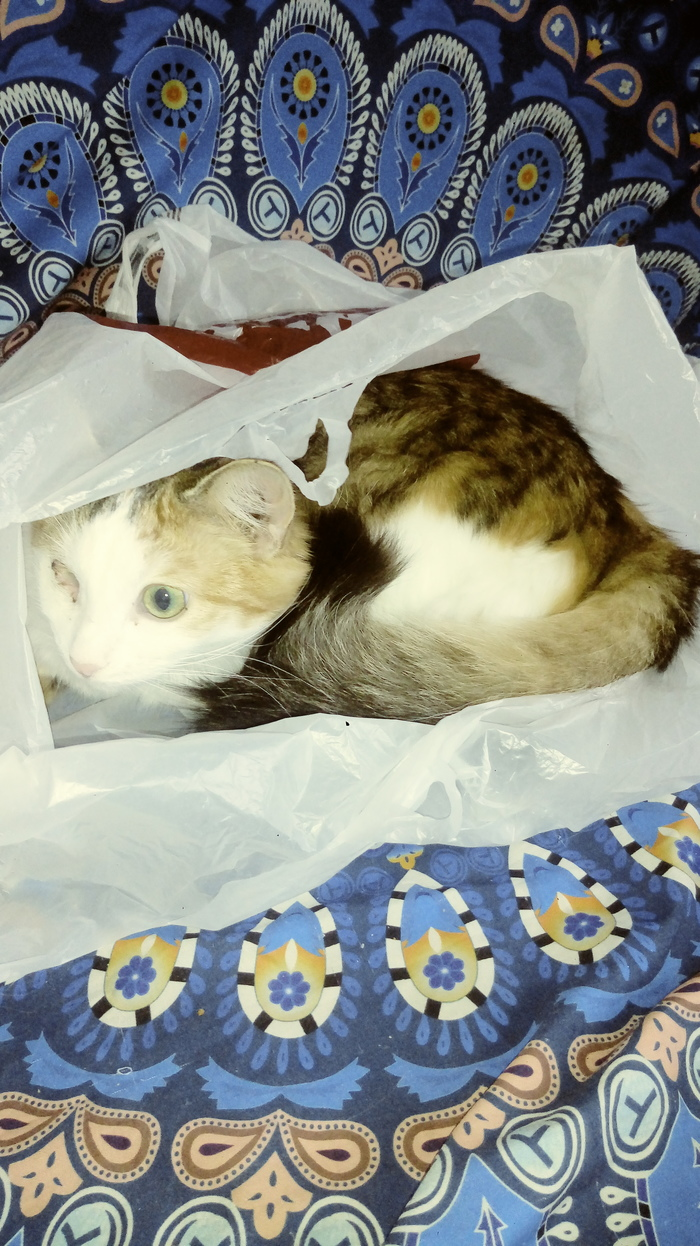 Засада Пакет, Кот, Животные
