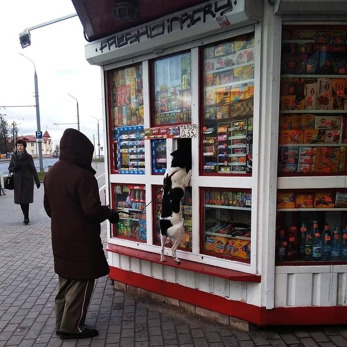 Собака-покупака