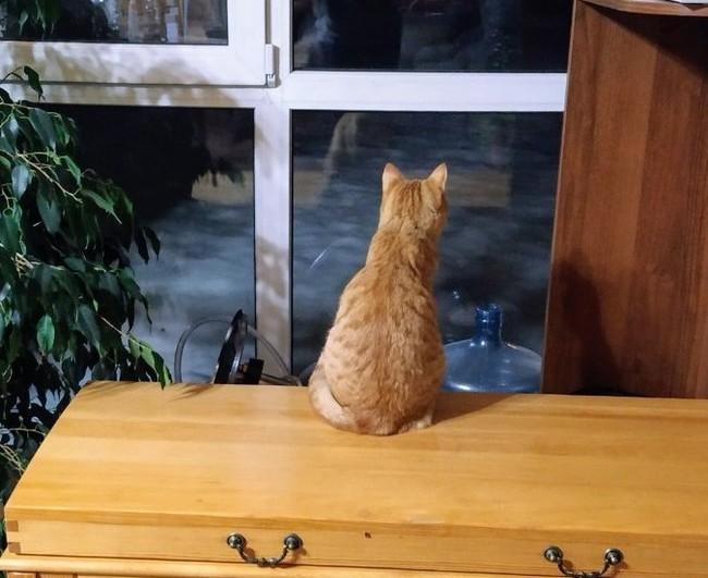 Где-то там, за окном её ждут котики.