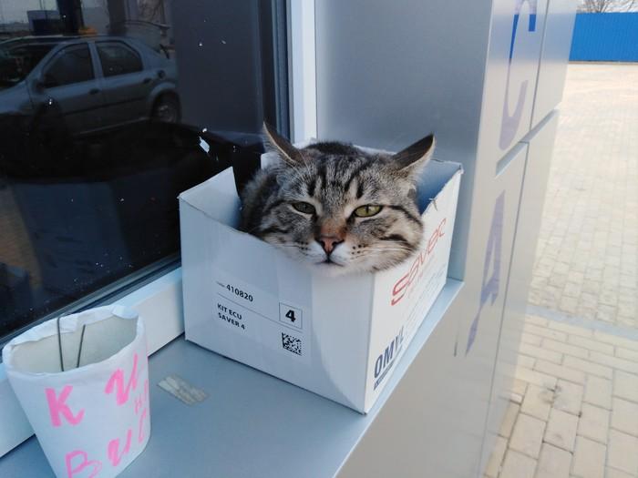 Кошка в коробке Коробка и кот, Кот, Домашние животные
