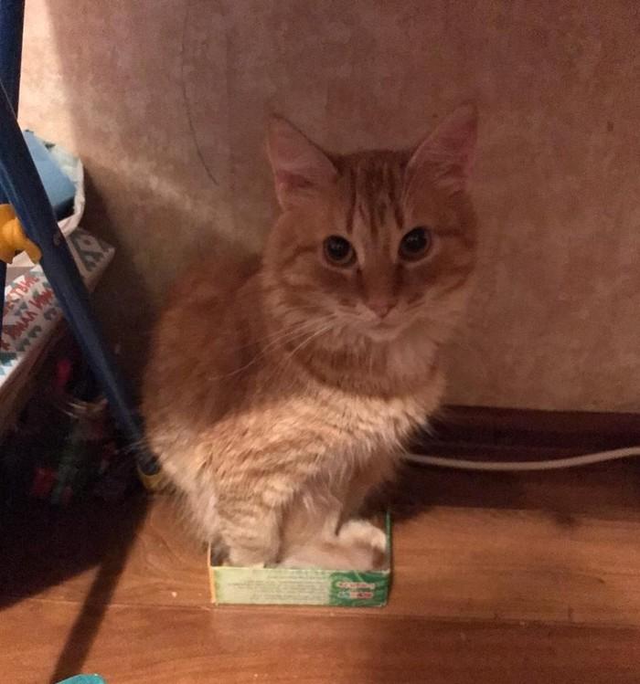 Когда ты слишком большой для коробочки
