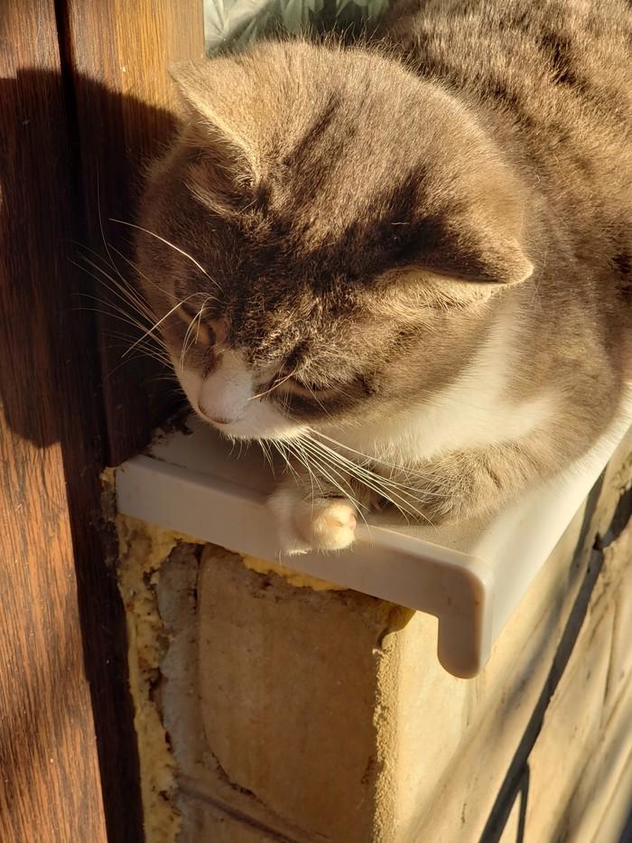 Особенная кошка и не только. Кот, Кошатники, Милота, Генетика, Длиннопост, Олигодактилия, Домашние животные