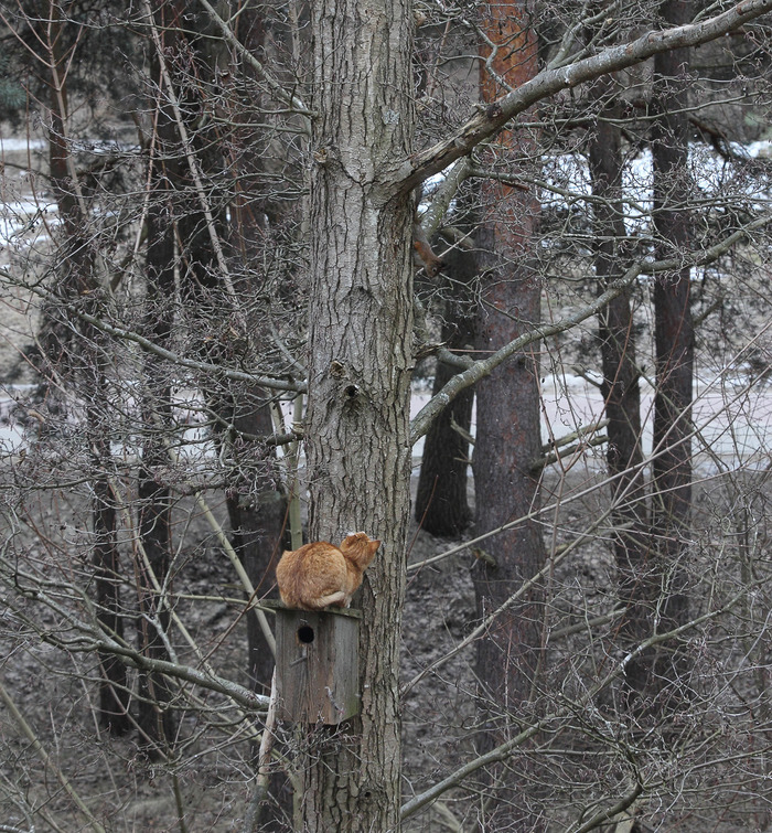 Мартовские котэ =) Кот, Март, Длиннопост