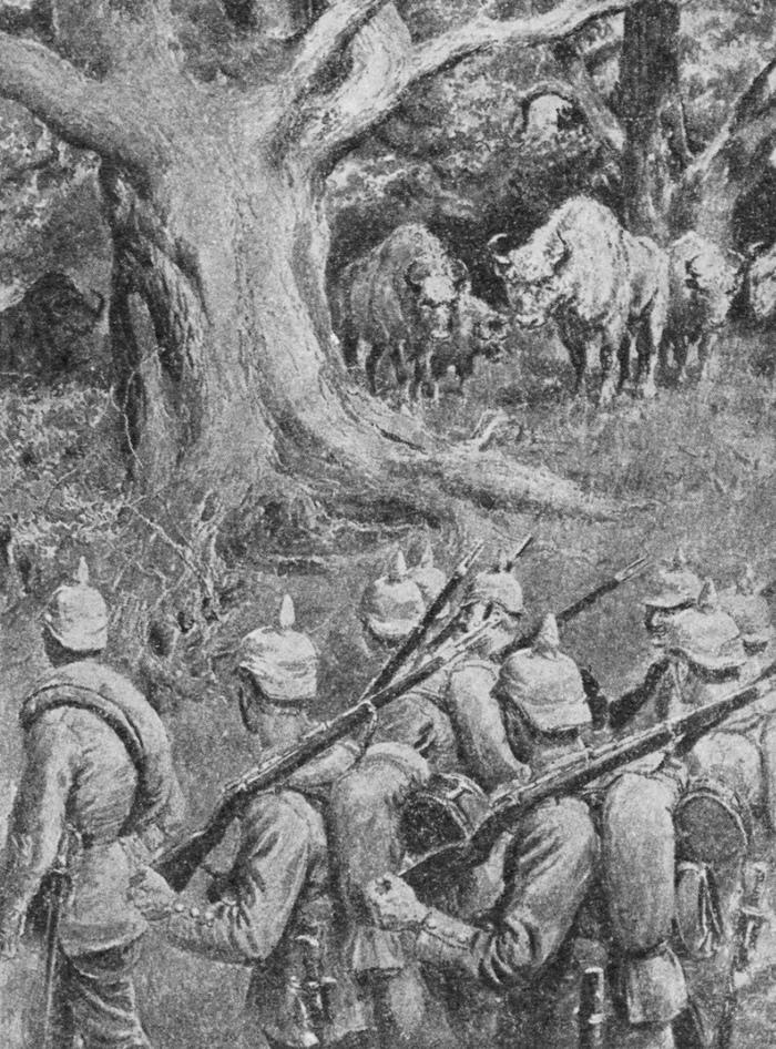Была заметку про войну с страусами Эму в Австралии, но наткнулся на заметку про ещё один интересный случай. Первая мировая война, Пропаганда, Российская империя, Журналистика