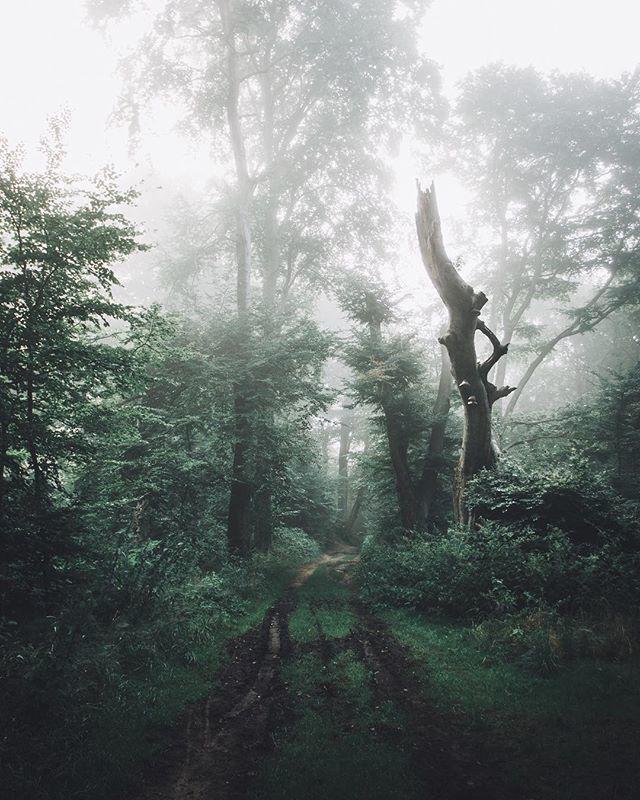 Тихо в лесу, только не спит барсук...