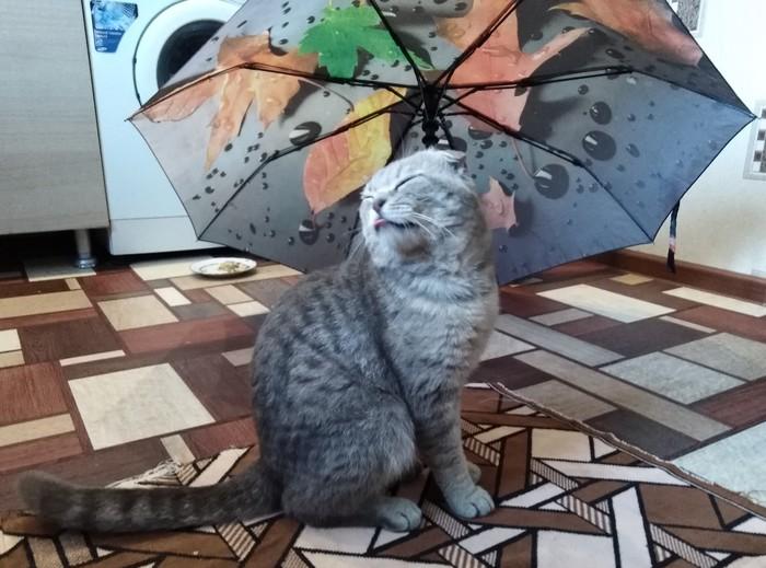 Солнце и... дождь?