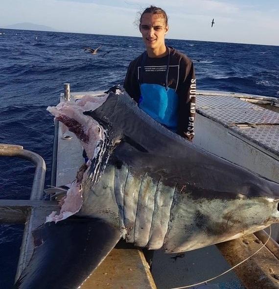 """""""Эта акула съеденная чем-то огромным во время наматывания, одна голова весила 100 кг"""""""