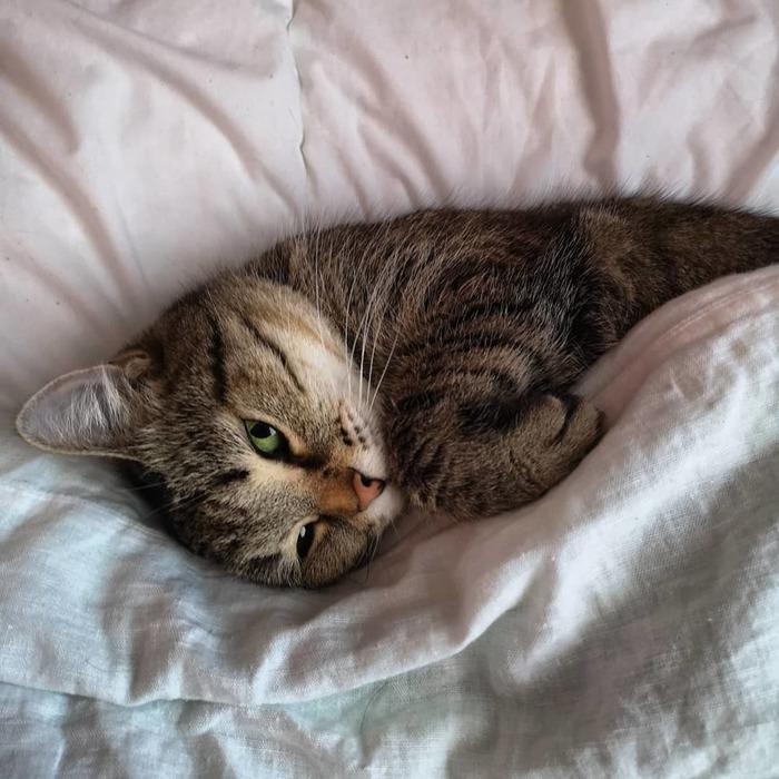 Доброе утро Кот, Доброе утро, Потягушки, Домашние животные
