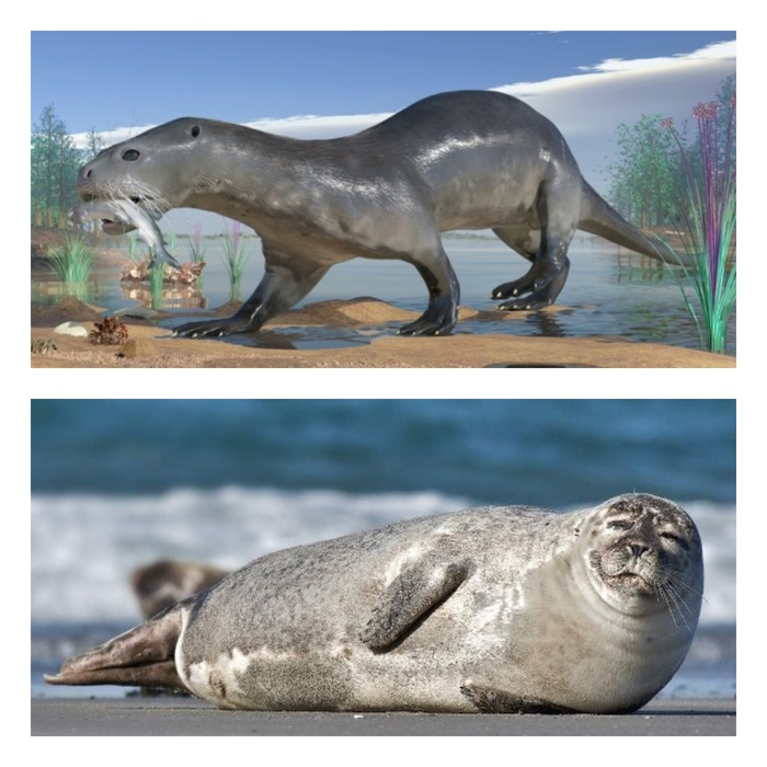 Как выглядели сухопутные предки морских животных Интересное, Эволюция, Животные, Длиннопост, Яндекс Дзен, Копипаста