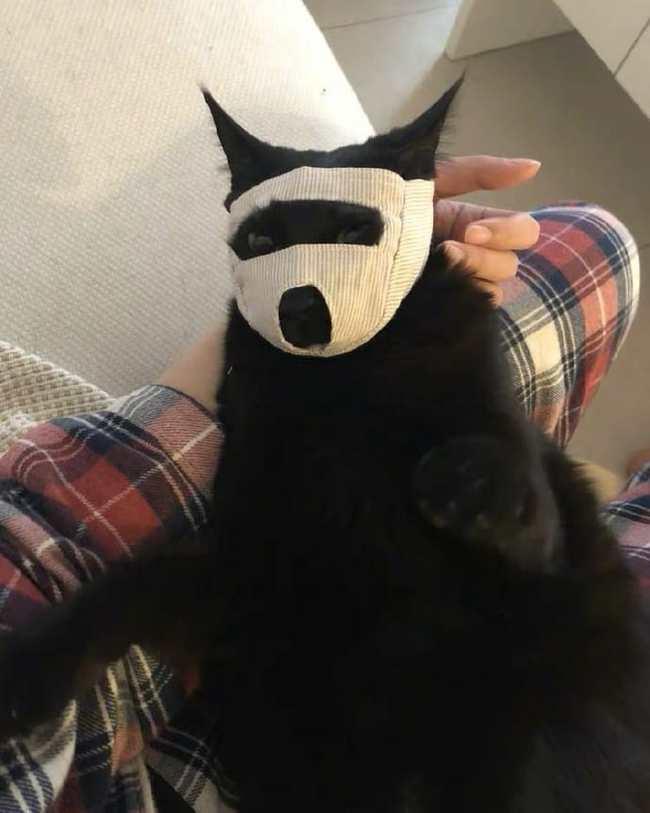 Анти-кусь маски, чтобы безболезненно закапать глаза или уши вашему пушистому божеству^) Кот, Маска, Фотография, Кусь, Длиннопост, Домашние животные