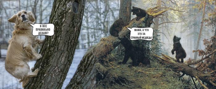 Утро в медве-псовом лесу