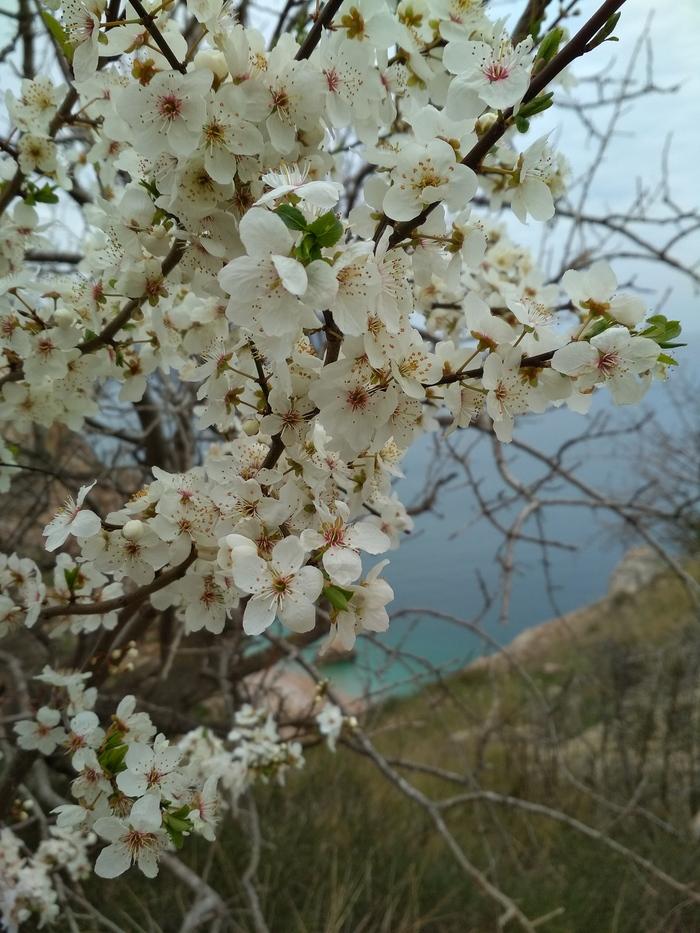 Весна в Севастополе Весна, Севастополь, Крым, Красота, Длиннопост
