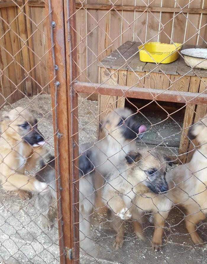 Кому и чем мешают животные? Приют для животных, Кот, Собака, Жестокость, Бездомные животные, Длиннопост, Без рейтинга