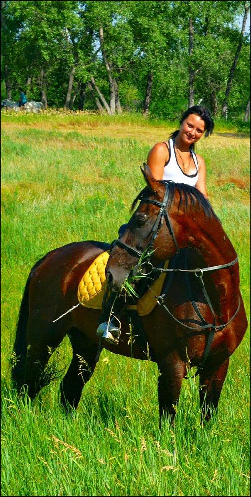 Каламбуры от моей наставницы Лошади, Забавное, Воспоминания, Дончаки, Конюшня, Длиннопост, Конный спорт