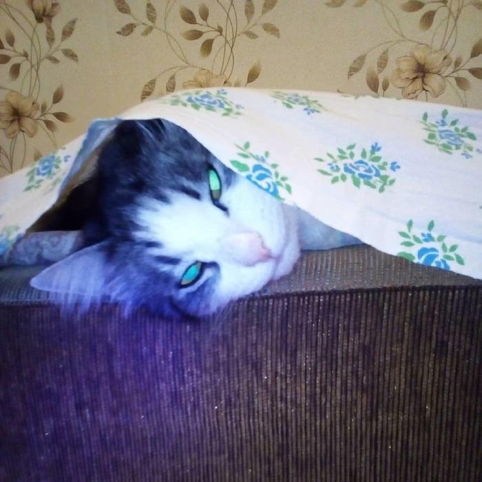 Кот Кот, Фотография, Домашний любимец