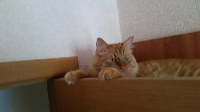 Так удобно, поверьте Кот, Chill, Фото на тапок, Длиннопост