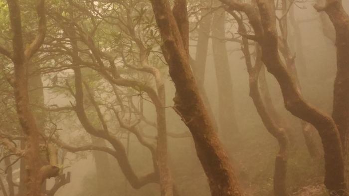 Сезон дождей в Гималаях Природа, Погода, Туман, Монсун, Индийские Гималаи, Длиннопост, Фотография