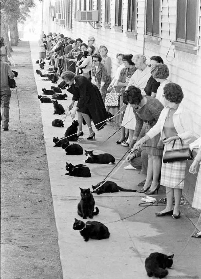 «Если долго смотреть в бездну, бездна начнет смотреть в тебя» Кот, Черный кот, Кастинг, Фильмы, Голливуд, Истории ужаса, Старое фото, Длиннопост