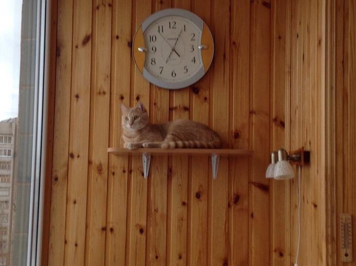 Все для котика Кот, Друг, Длиннопост
