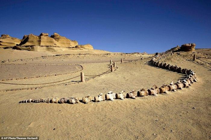 ДОЛИНА КИТОВ Египет, Окаменелости, Палеонтология, Видео, Длиннопост