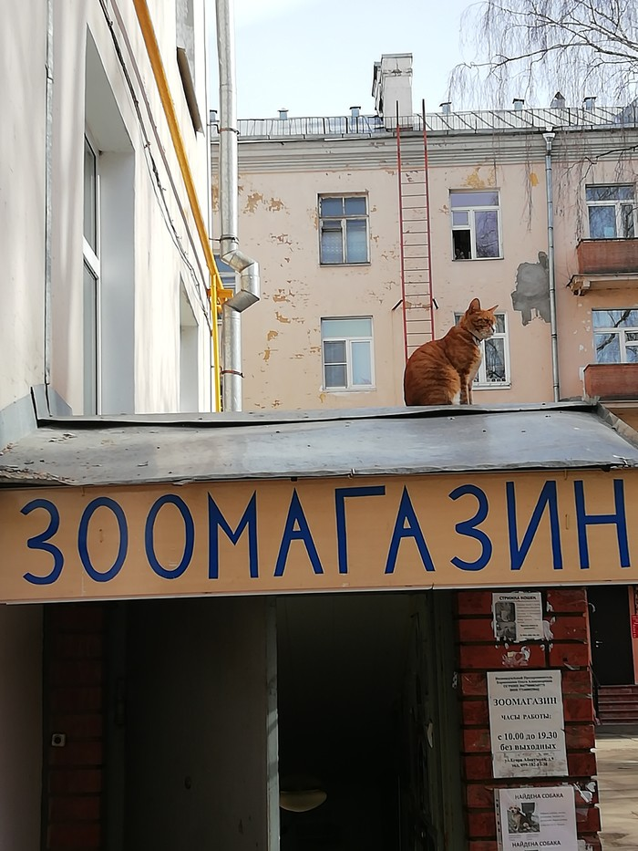 За кормом наверно пришёл) Кот, Зоомагазин, Длиннопост, Домашние животные
