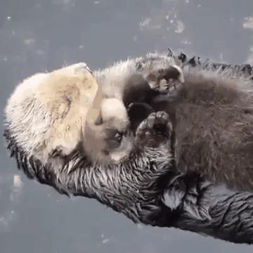 Любящая мама выдра