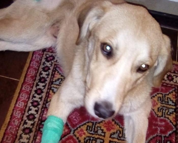 Краснодарский пенсионер спас бездомного пса, сбитого машиной, и теперь ищет ему дом Новости, Россия, Добро, Собака, Пенсионеры, Краснодар, Без рейтинга
