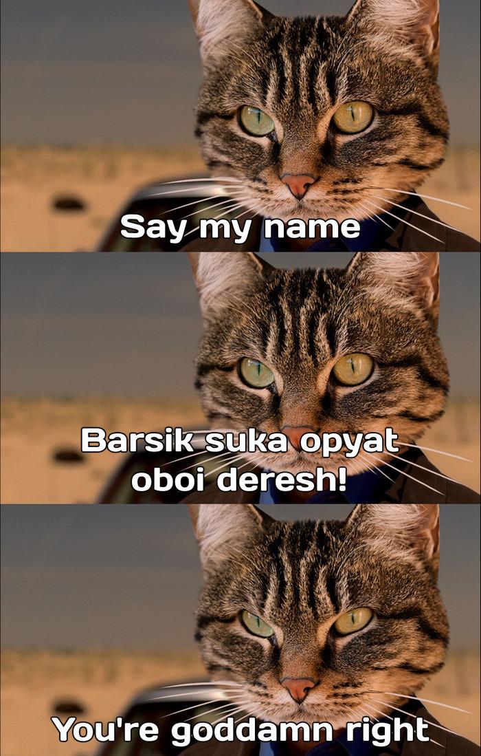 Новость №813:Японские ученые доказали, что домашние кошки на самом деле могут откликаться на свое имя Образовач, Кот, Наука, Breaking Bad
