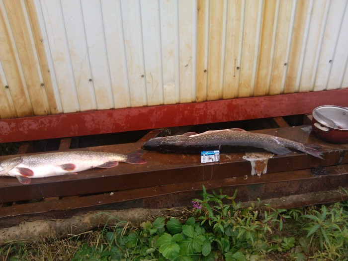 Мой путь к спиннинговой рыбалке Рыбалка, Жизненный путь, Ожидание лета, Скучаю, Длиннопост, Спиннинг