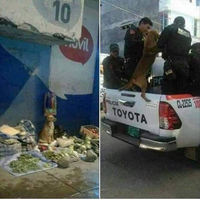 Собака арестована в Испании за продажу овощей Собака, Арест, Незаконная торговля