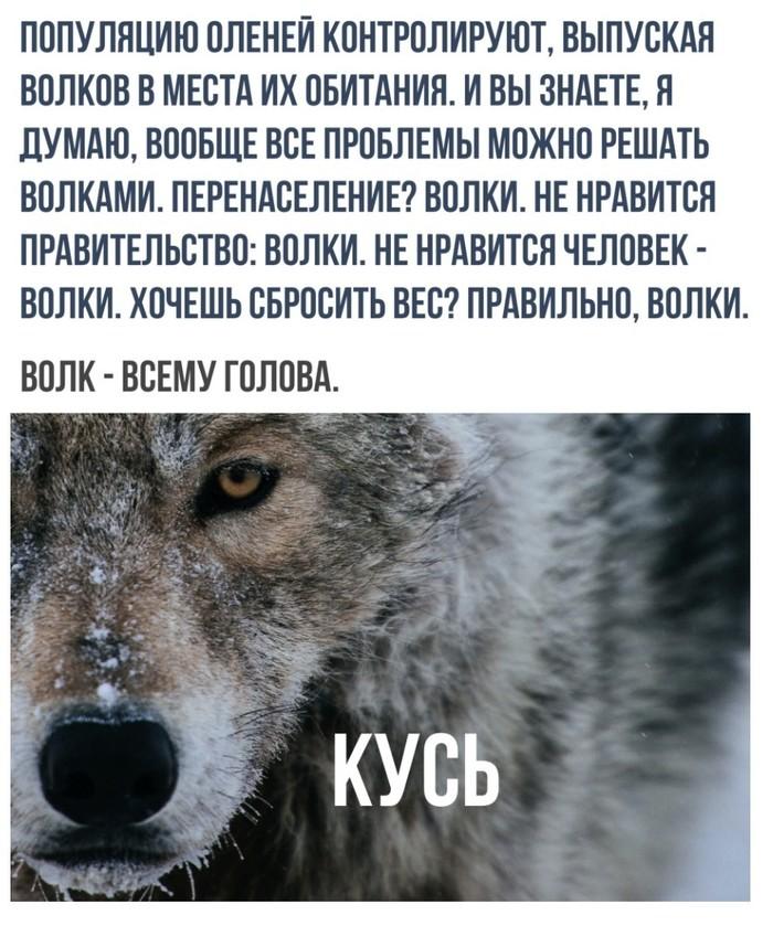 Волкопост