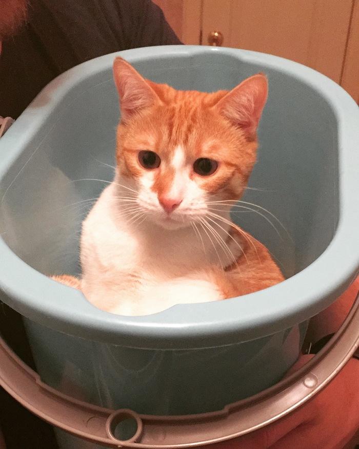 Мы тоже хотим на волну о котах Болезнь, Сила Пикабу, Длиннопост, Кот, Домашние животные
