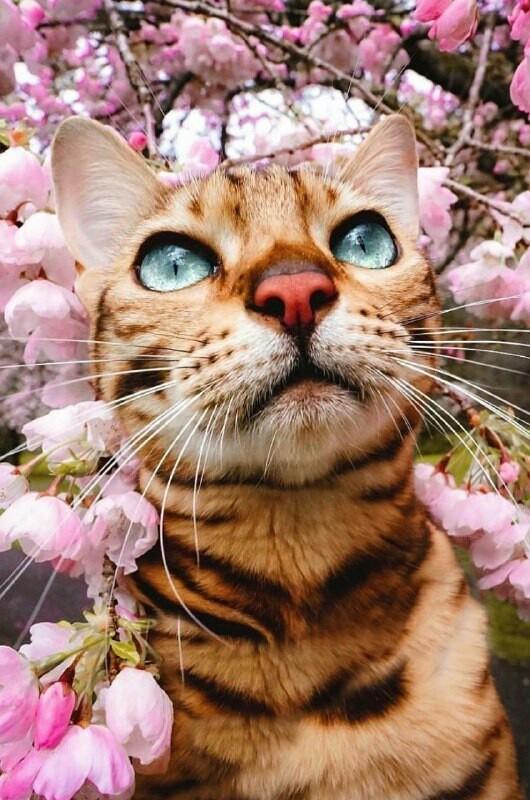 Весна и кошки