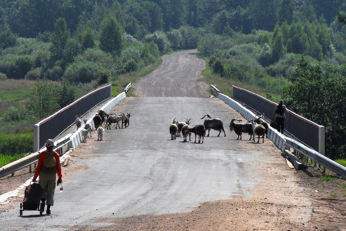На мосту через Плюссу.