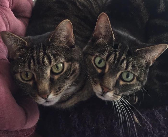 Двуглавый кот