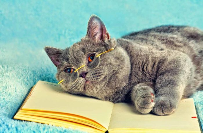 Картинки по запросу Интровертированный кот