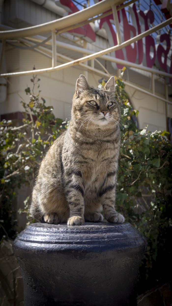 Теплый Балаклавский кот Кот, Фотография, Котомафия, Балаклава, Севастополь, Крым